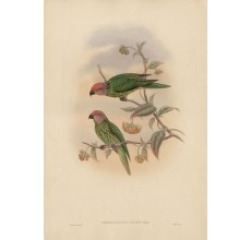 Sharpe Goldie's Perroquet Lithograph William Hart Gould