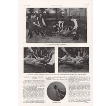 extraction Lion dentist vet tooth photogravure