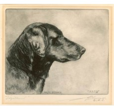 Black retriever Drypoint Malte Sterner etching