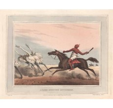arabs hunting ostriches antique print