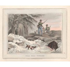 wild boar wounded antique print