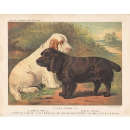 Field Spaniels Clumber Spaniel Sussex Chromolithograph Cassell dog