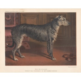 Deerhound Chromolithograph Cassell book dog