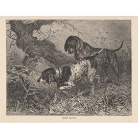 German Pointers engraving Cassell book dog