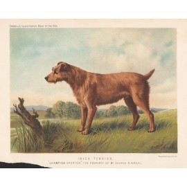Irish Terrier Chromolithograph Cassell book dog