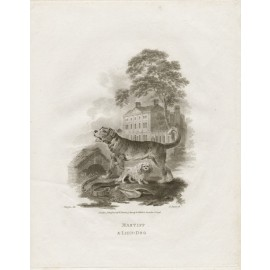Mastiff Lion Dog engraving Tookey Julius Ibbotson