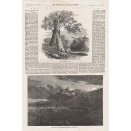 Climbing Tree Aboriginal Mode Disposal Dead Australia engraving