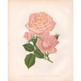 catherine mermet rose print
