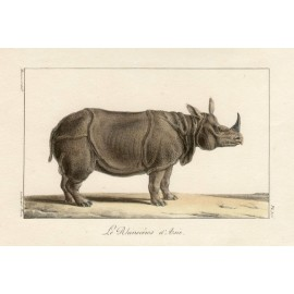 Asian Rhioceros Lithograph French antique print