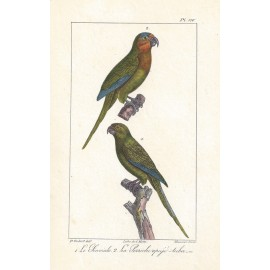 Buffon Parrots French antique Lithograph Motte Oudart