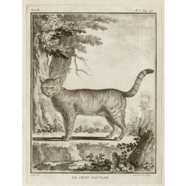 Le Chat Sauvage engraving Louis Le Grand De Seve