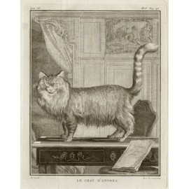 Le Chat D'Angora engraving Louis Le Grand De Seve