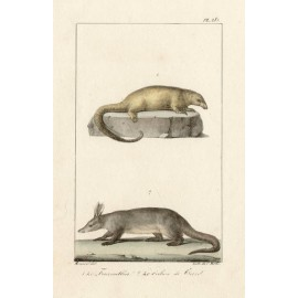 Anteater Aardvark Lithograph French antique print