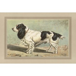 Field Spaniel Chromolithograph print gun dog breed