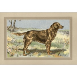 Golden Retriever Chromolithograph print gun dog breed