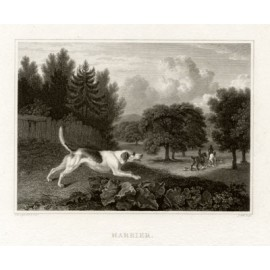 Harriers engraving Scott Philip Reinagle dog