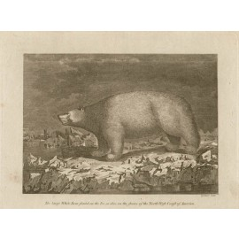 White Polar bear engraving Grainger Cook voyages