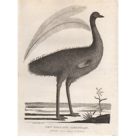 New Holland Cassowary Emu engraving Mazell Watts 1789