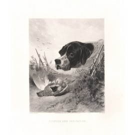 Pointer Partridge engraving Ryall Richard Ansdell dog