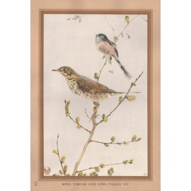 Song Thrush Long Tailed Tit Edward Detmold Nature pictures