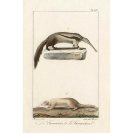 Anteater Tamandua Lithograph French antique print