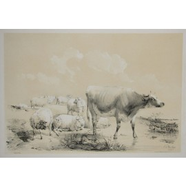 Grazing cattle cows lithograph Thomas Sidney Cooper