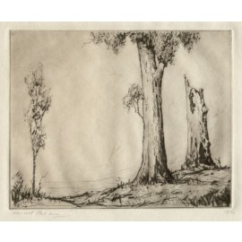 Trees signed etching Vincent Sheldon