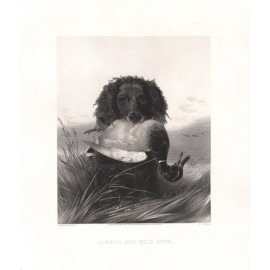 Spaniel Wild Duck engraving Ryall Richard Ansdell dog