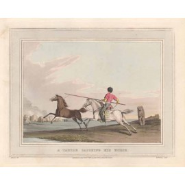 tartar catching horse antique print