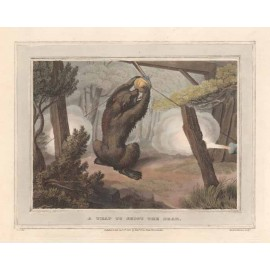 Shoot Bear Trap antique print