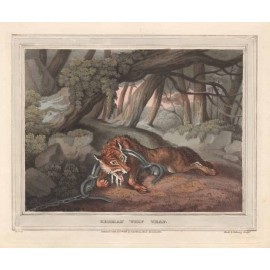 german wolf trap antique print