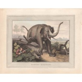 hunted elephant antique print