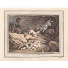 Hunting Tiger Cat antique print