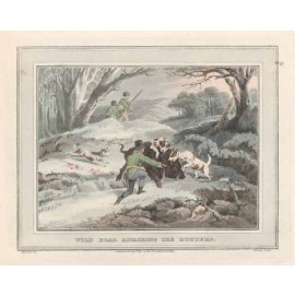 wild boar attacking hunters antique print