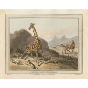 Hunting the Camelopard (Giraffe)