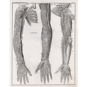 German anatomical lithograph - Veins in the Arm