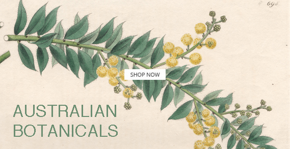 botanical vintage prints and etchings on paper
